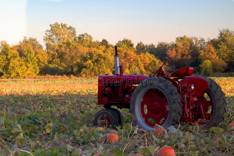 Tractor in a field of pumpkin. In the Fall royalty free stock photo