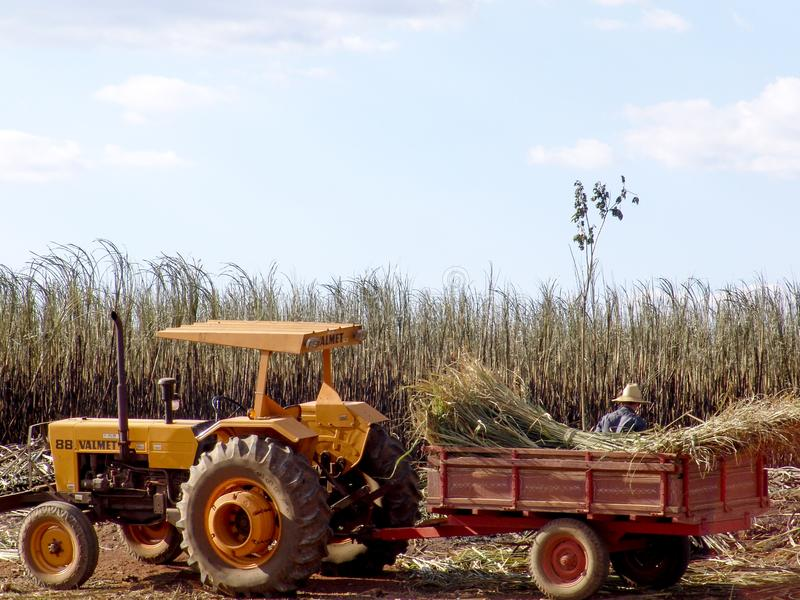 Tractor in labour harvest sugar cane stock image