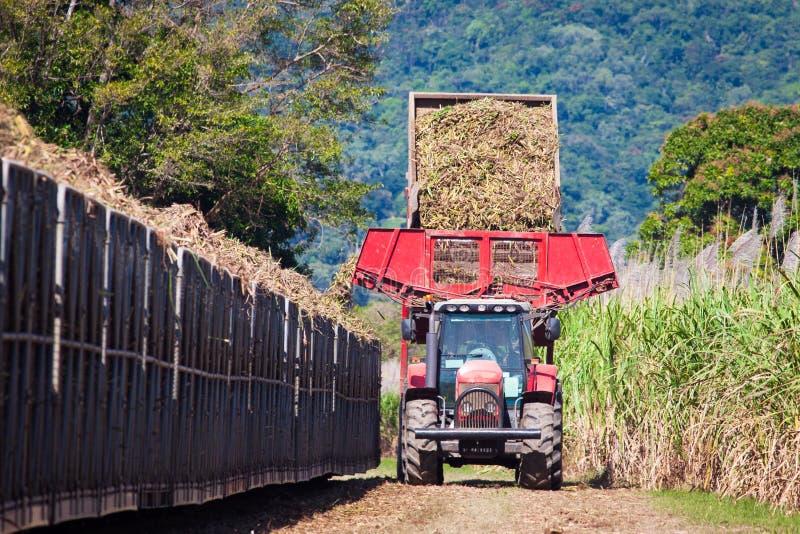 Tractor loading sugar cane onto train bin. A tractor is loading newly harvested sugar cane onto a cane train in North Queensland, Australia royalty free stock photos