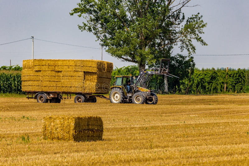 Tractor loads hay bales on trailer. Tractor is collecting the hay bales from the field and is loading them on the trailer stock photography