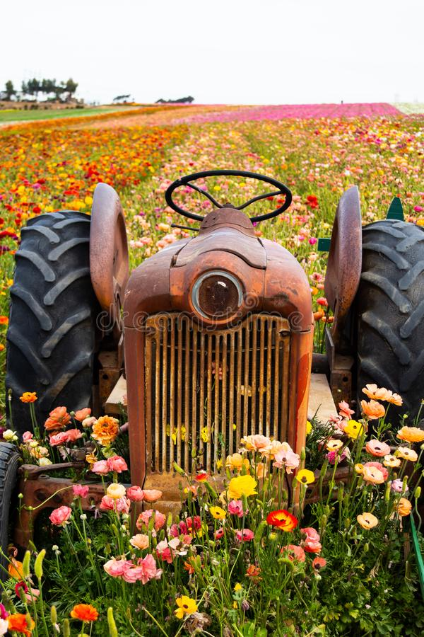 Tractor lost in field of flowers looking forelorn. Unused tractor set up as a prop in a field of flowers and looking to mesmerize you stock photography