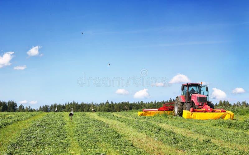 Tractor op het gebied, door ooievaars wordt omringd die stock foto