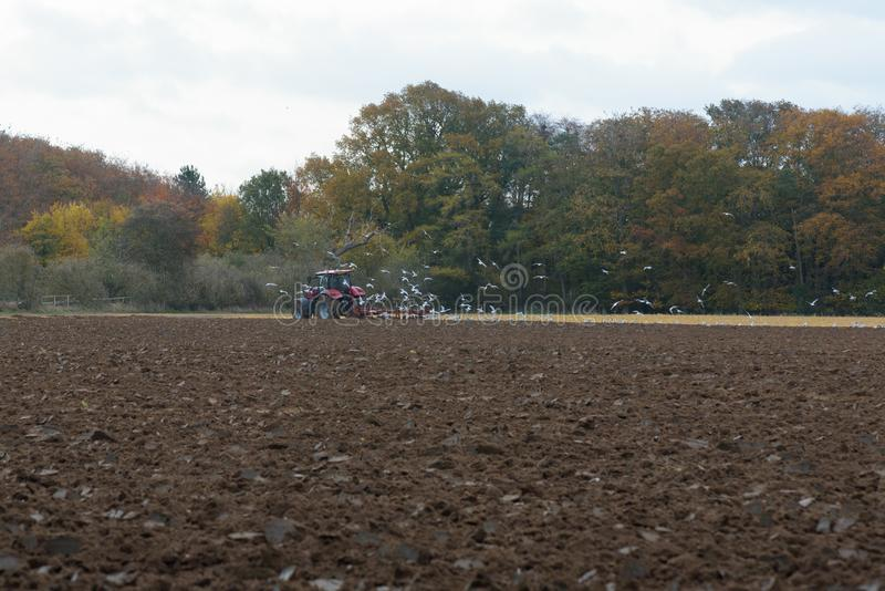 Tractor ploughing field. With flock of birds following stock photo