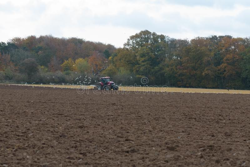 Tractor ploughing field. With flock of birds following royalty free stock photography