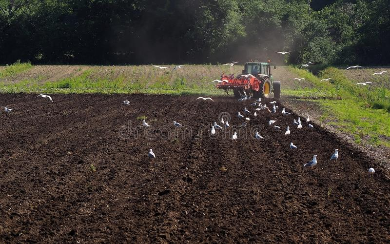 A tractor plows the field in a sunny spring day raising the dust , followed by seagulls.  royalty free stock photos