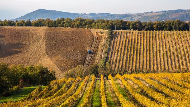 Tractor que ara el campo a lo largo de viñedos del otoño foto de archivo libre de regalías