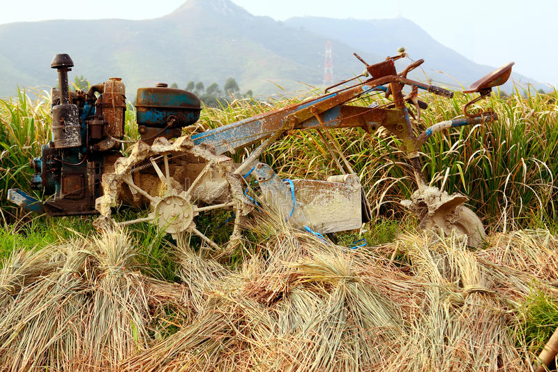 Tractor on rice farm. At day stock image
