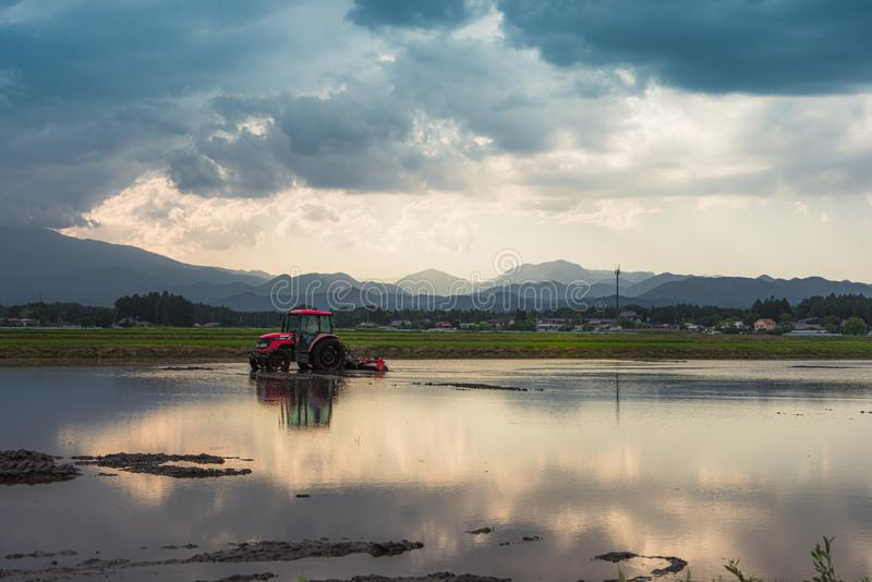 Tractor in a rice paddy. Tochigi, Japan. June 11, 2017. Tractor preparing a rice paddy for planting royalty free stock image