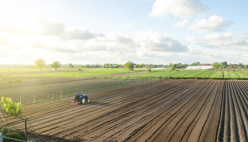 A tractor rides on a farm field. Farmer on a tractor with milling machine loosens, grinds and mixes soil. Loosening the surface, stock photo