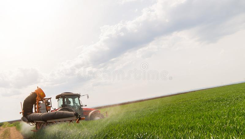 Tractor spraying pesticides on wheat field with sprayer at spring stock photo