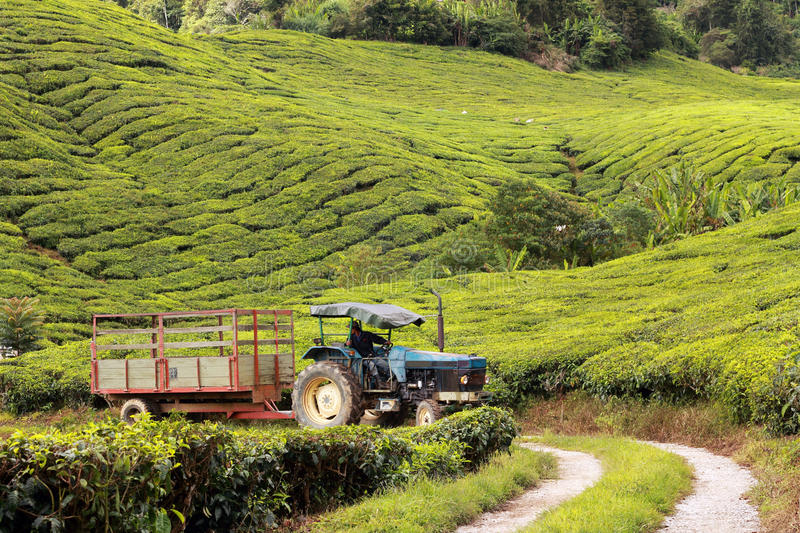 Tractor on tea plantation royalty free stock photo