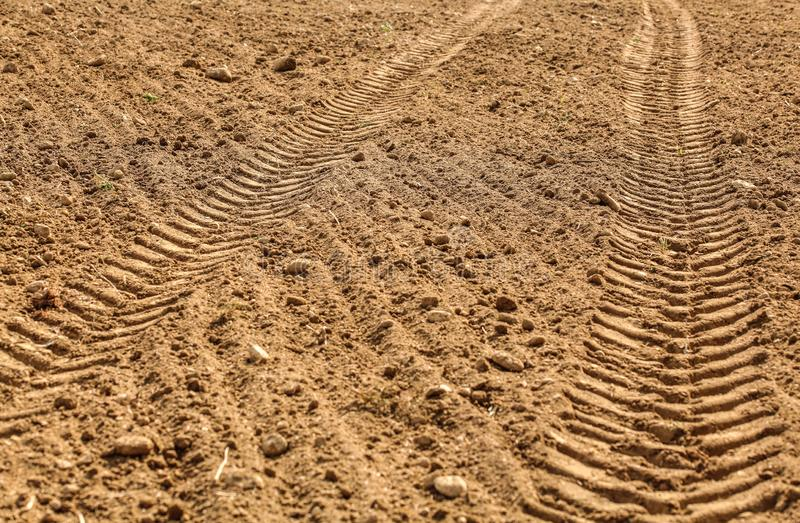 Tractor tire print in dry field, lit by sun.  stock images