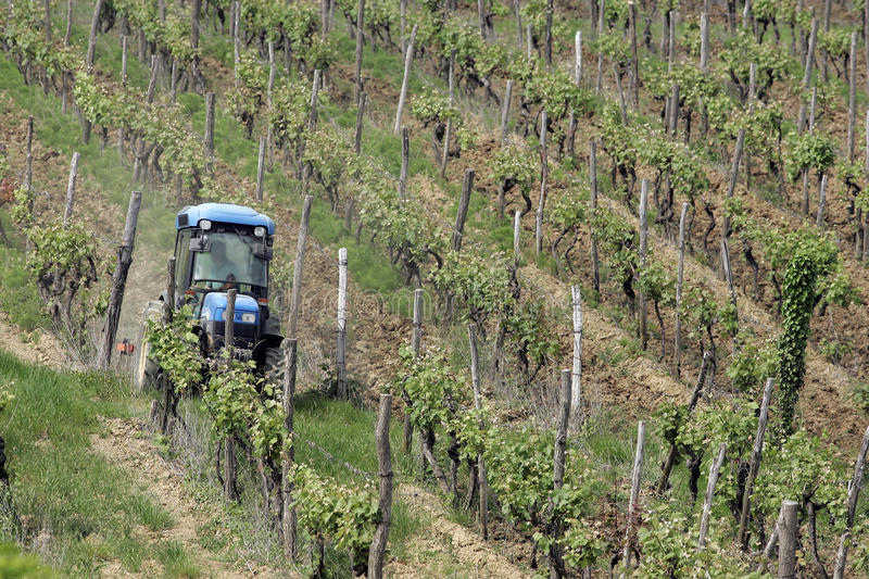 Download Tractor in vineyard stock photo. Image of countryside - 11957796