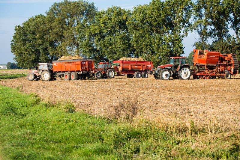 Tractores y descargas por completo de patatas imagen de archivo