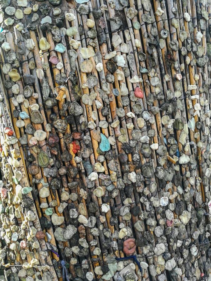 A tradição de pôr beatas da pastilha elástica e do cigarro sobre uma árvore perto da sepultura de Jim Morrison em Pere Lachaise C imagens de stock