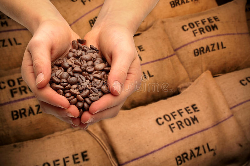 Trading with coffee beans. Hands with coffee beans, coffee trading royalty free stock photo