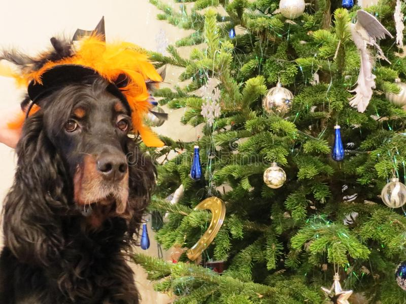 Tradition de famille d'arbre de Noël d'amusement de vacances de costume de chien de nouvelle année image libre de droits