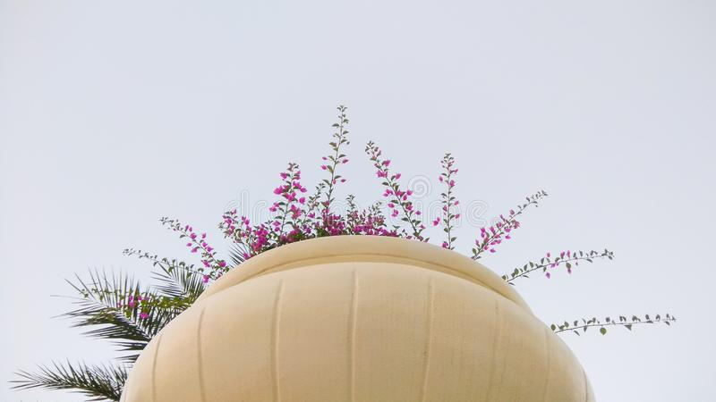 Bougainvillea flowers in a big pot. Traditional and all time favorite bougainvillea flowers in a big pot stock images