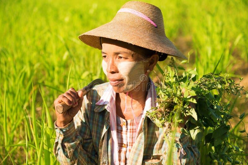 Traditional Asian female farmer royalty free stock photo