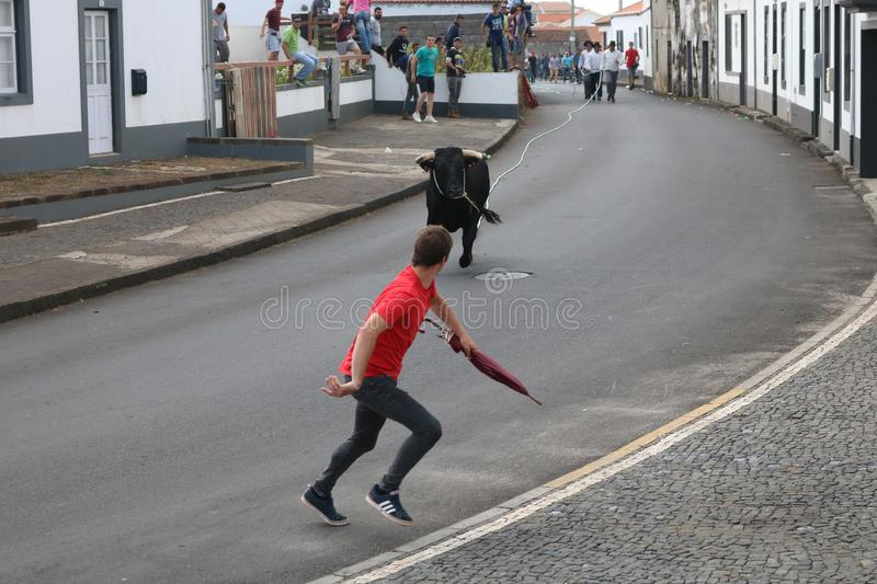 A loose bull. Traditional azores bullfighting feast. Portugal. Europe. A bull is released in a village center, Graciosa, Azores , Portugal. While several men stock images
