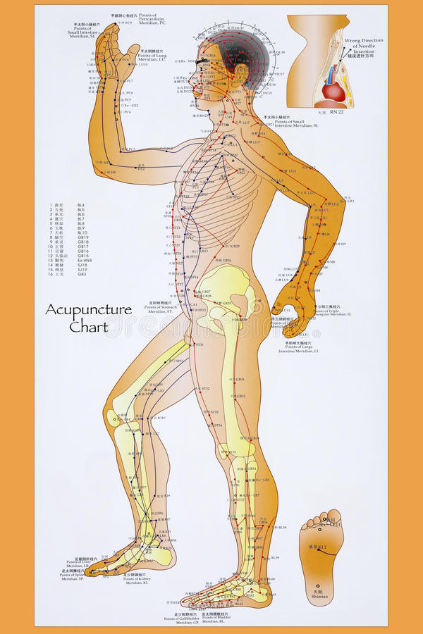 Traditional Chinese Acupuncture Chart stock photos