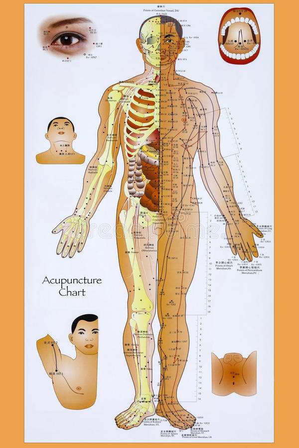 Traditional Chinese Acupuncture Chart stock image