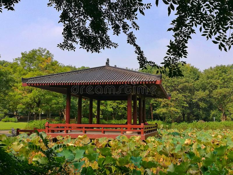 Traditional Chinese garden under blue sky in Wuhan city hubei province china. Traditional Chinese garden with pavilion, plants and trees in Wuhan city hubei royalty free stock images
