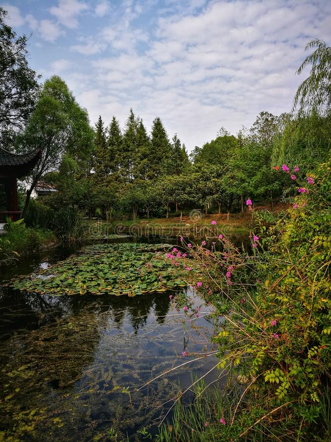 Traditional Chinese garden under blue sky in Wuhan city hubei province china. Traditional Chinese garden with plants and trees in Wuhan city hubei province china stock photo
