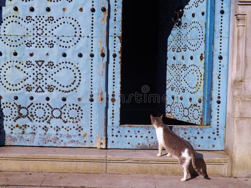 Traditional door in Tunis, Tunisia. A curious cat is looking inside: What's in there stock images