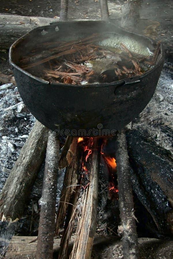 Traditional drink ayawuasca royalty free stock photos