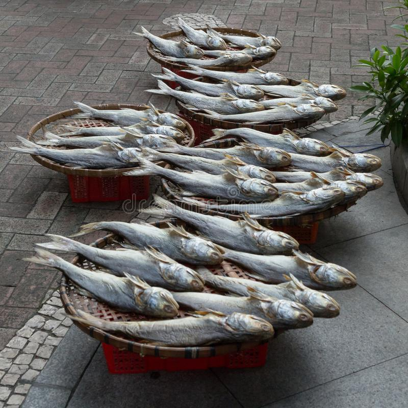 Traditional drying of salted fish stock image
