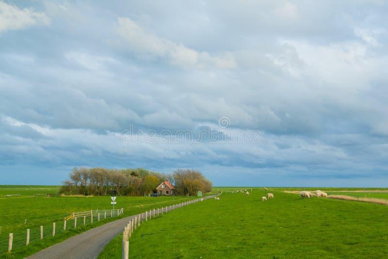Traditional dutch village stock photo
