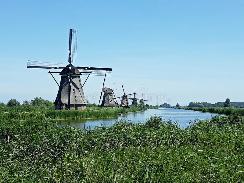 Traditional Dutch windmills at Kinderdijk, Holland. Beautiful landscape with green grass and traditional Dutch windmills on the shore of a river in Kinderdijk royalty free stock photography