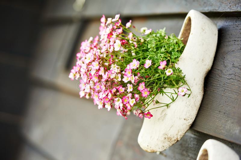 Traditional dutch wooden shoe clog with fresh flower stock image