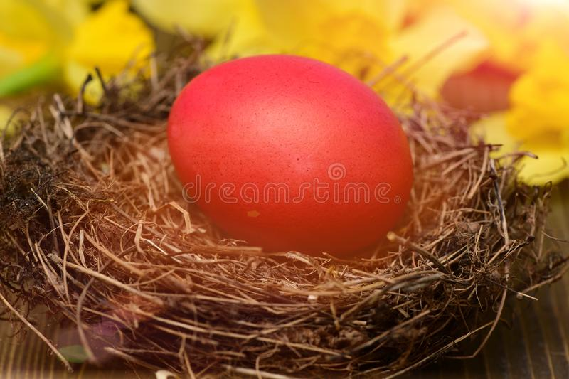 Traditional easter colorful painted egg in nest, spring yellow narcissus royalty free stock photography