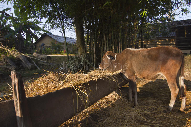 Traditional farm in Nepal, Terai. stock photography