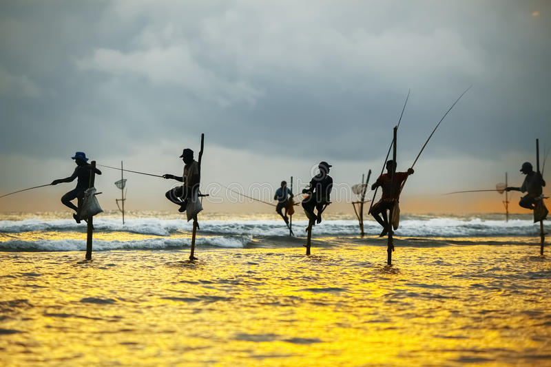 Traditional fishermen on sticks at the sunset in Sri Lanka royalty free stock images
