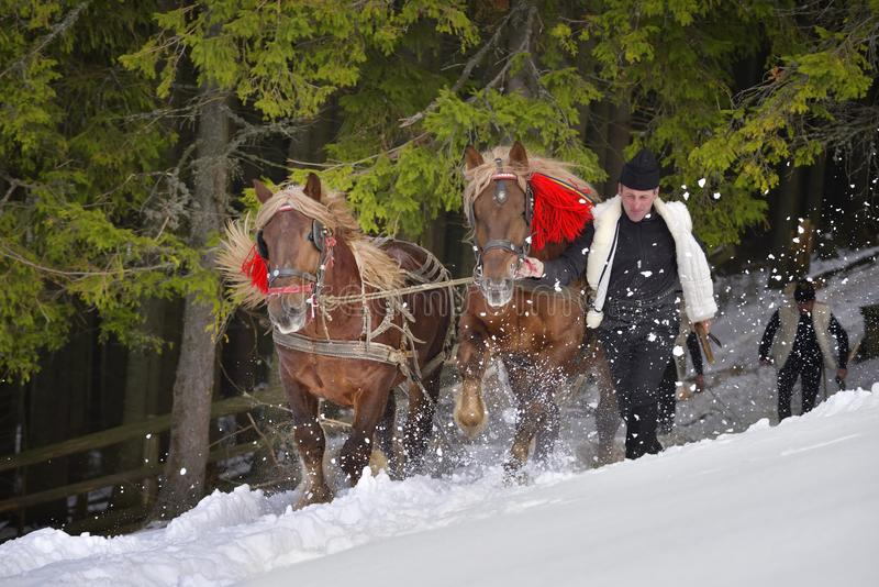 Traditional Forest workers in winter time dragging wood with horses stock photo