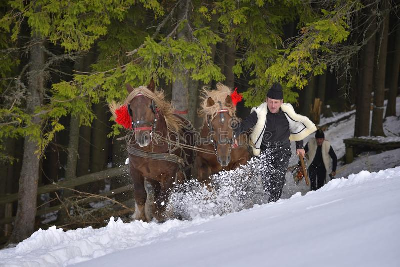Traditional Forest workers in winter time dragging wood with horses stock photos
