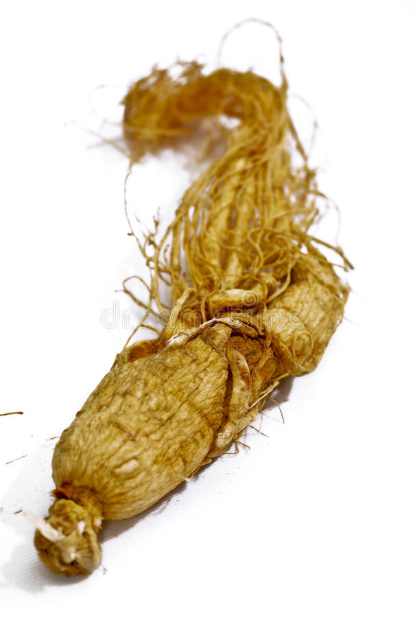 Traditional Ginseng Herb 01 royalty free stock image