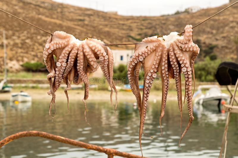 Traditional greek food Octopus drying in the sun. In the viilage of Greek Island. Seafood prepared on a grill stock image