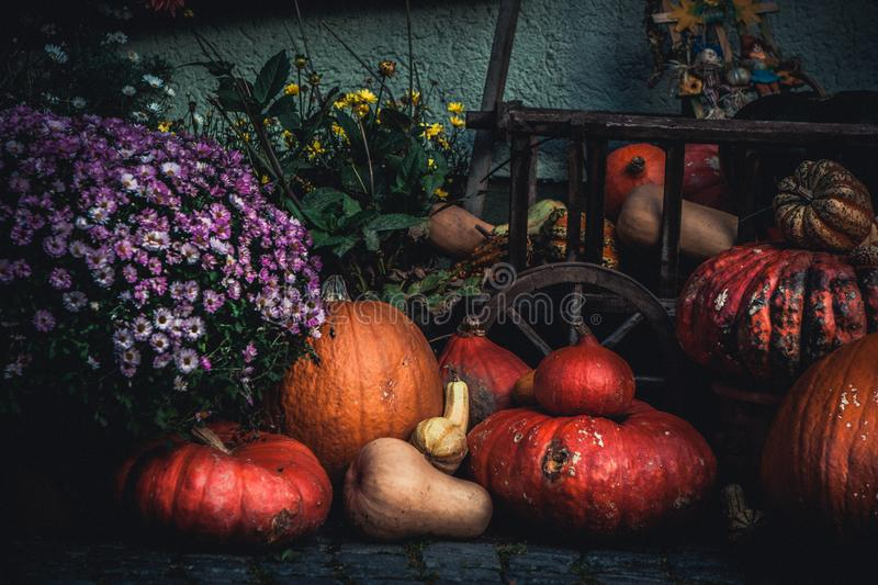 Traditional Halloween decoration, many different pumpkins and flowers on the street stock photography