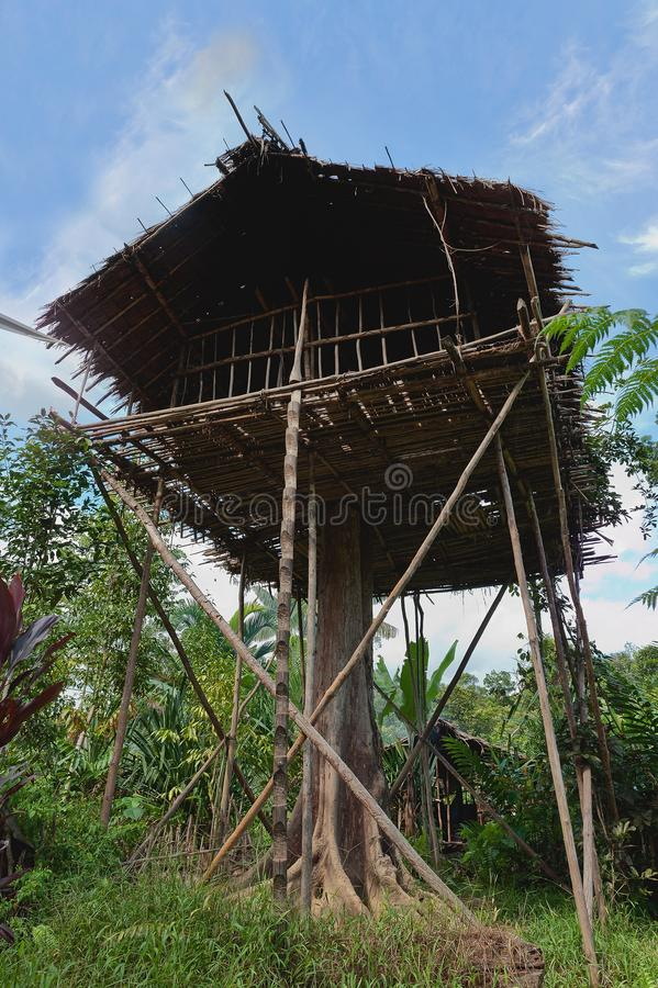 Traditional Koroway house on the tree. Traditional Koroway house perched in a tree 35 meters above the ground, Western Papuasia, former Irian-jaya, Indonesia stock images