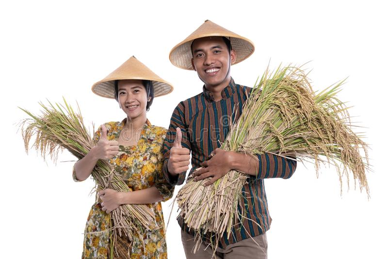 Traditional male and female asian farmer with rice paddy grain in hand smiling to camera royalty free stock photography