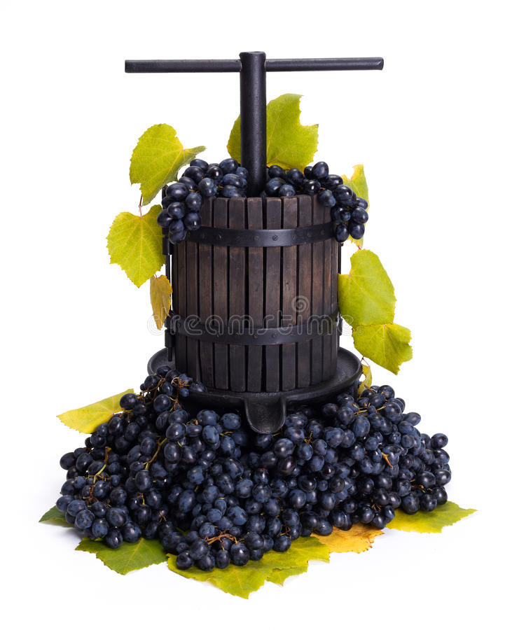 Traditional manual grape pressing utensil with blue grapes stock photos