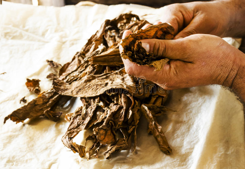 Traditional manufacture of cuban cigars at Cuba royalty free stock image
