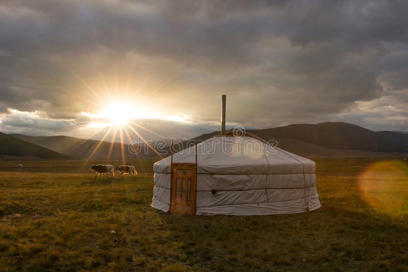 Traditional Mongolian yurt in the glare of a setting sun. Traditional Mongolian yurt and a pair of cows during a sunset. Khuvsgol, Mongolia royalty free stock photography
