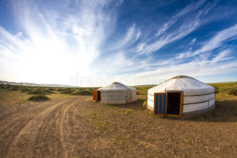 Traditional Mongolian yurt and a pair of cows during a sunset. Gobi Desert, Mongolia. Traditional Mongolian yurt and a pair of cows during a sunset. Gobi Desert royalty free stock photo