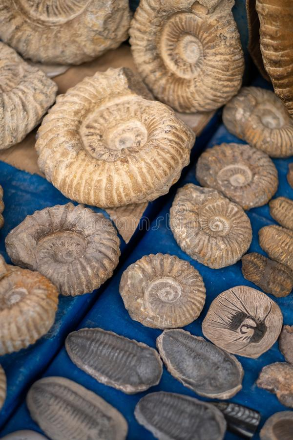 Traditional Moroccan market with souvenirs. fossils of ancient animals royalty free stock images