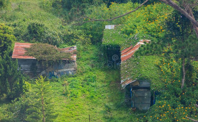 Traditional Natural Rural Life, Concept Zinc roofed, wooden house lives among the mother of nature. Green living climbing vine. stock image